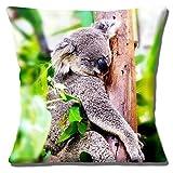 süß Schlaf Erwachsene Koalabär im Baum Foto Druck Design - 16