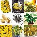Qenci 10/20/30/50/100 pcs Banane Samen Mini Bonsai, exotische Obst Bäume für Hausgarten und Outdoor Pflanzen von Qenci bei Du und dein Garten