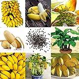 Qenci 10/20/30/50/100 pcs Banane Samen Mini Bonsai, exotische Obst Bäume für Hausgarten und Outdoor Pflanzen