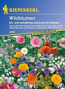 Wildblumen, Mischung mit Kräutern