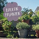 Balkonpflanzen Set - Ausgewählte Pflanzen, die es mit dem in die Höhe und Breite wachsen nicht so übertreiben - 10 Pflanzen für den Balkon