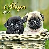 Mops 2019: Broschürenkalender mit Ferienterminen. Hunde-Kalender. 30 x 30 cm