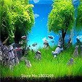 2016 500pcs / bag Moos Wasser Wasserpflanze Samen, Familie leicht Pflanzensamen, Aquarium Grassamen (Mischungsmindestbestell $ 6)