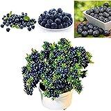 Semi di frutta - Semi di albero di mirtillo delaman, 50 pezzi, decorazioni per piante bonsai