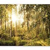 murando - Fototapete Wald 300x210 cm - Vlies Tapete - Moderne Wanddeko - Design Tapete - Wandtapete - Wand Dekoration - Wald Landschaft Natur Sonne Grün Bäume Sonnenuntergang c-C-0032-a-c