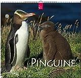 PINGUINE - Original Stürtz-Kalender 2017 - Mittelformat-Kalender 33 x 31 cm - Tierfotoagentur