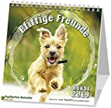 Pfiffige Freunde 2019: Postkarten-Kalender