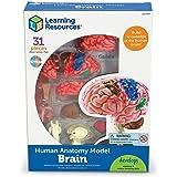 Learning Resources LER3335 anatomimodell för mänsklig hjärna