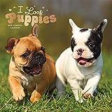I love Puppies - Ich liebe Welpen - Hunde 2019 - 16-Monatskalender: Original BrownTrout-Kalender [Mehrsprachig] [Kalender] (Wall-Kalender)