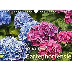 Prachtvolle Gartenhortensie (Wandkalender 2019 DIN A4 quer): Blüten von Hortensien (Monatskalender, 14 Seiten ) (CALVENDO Natur)