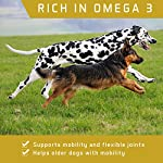 ACTIF PETS Flaxseed Oil for Dogs-Rich in Omega 3, 6 & 9 for Dry, Itchy Skin/Coat. A Natural Dog Supplement for Stiff… 11