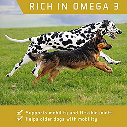 ACTIF PETS Flaxseed Oil for Dogs-Rich in Omega 3, 6 & 9 for Dry, Itchy Skin/Coat. A Natural Dog Supplement for Stiff… 4