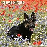 Magnet & Stahl 'Deutscher Schäferhund Traditioneller' 2018Kalender