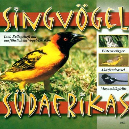 Singvögel Südafrikas