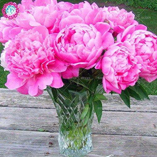 11.11 Big Promotion! 20 pcs / lot graines rares pivoines colorées graines de Bonsaï chinois jardin et la maison plante herbe organique 2