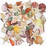 Conchiglie di mare miste 9 tipi 3-9 cm conchiglie naturali e 2 tipi di stelle marine per la spiaggia a tema festa decorazioni di nozze artigianato fai da te decorazioni per la casa forniture per pesci