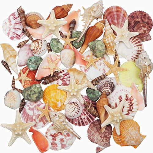 Muscheln Gemischt 9 Arten Ozean Muscheln und 2 Arten Seesterne 3-9 CM Perfekt für Vase Füllstoffe,Strand Thema Party Hochzeit Dekor,DIY Kunsthandwerk,Fisch Panzer,Kerze Herstellung