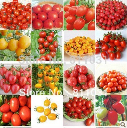 300PCS (10 Stück) Tomatensamen (MIX) Lila Schwarz Rot Gelb Grün Kirsche Pfirsich Birnentomate Non-GMO Bio-Lebensmittel FREE SHIPPING