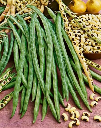 california-black-eye-bush-bean-seeds-phaseolus-vulgaris-5-grams-approx-25-gardening-seeds-vegetable-