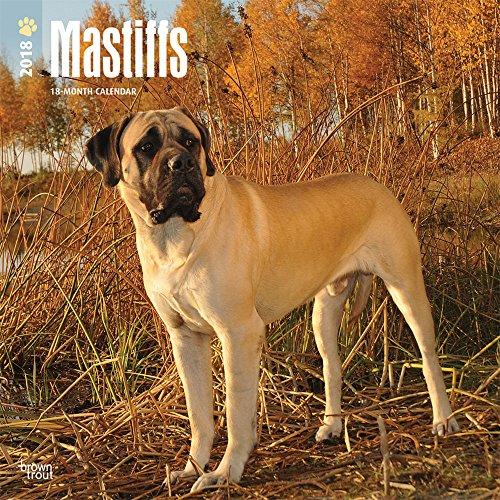 Mastiffs 2018 - 18-Monatskalender mit freier DogDays-App: Original BrownTrout-Kalender [Mehrsprachig] [Kalender] (Wall-Kalender)