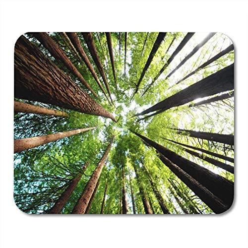 AOHOT Mauspads Green Grow Ancient California Redwood Trees Beech Forest Great Ocean Road Victoria Australia Oxygen Mouse pad Mats 9.5