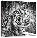 schöner neugieriger Tiger schwarz/weiß, Format: 60x60 auf Leinwand, XXL riesige Bilder fertig gerahmt mit Keilrahmen, Kunstdruck auf Wandbild mit Rahmen, günstiger als Gemälde oder Ölbild, kein Poster oder Plakat