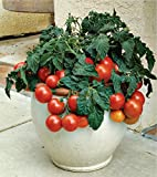 Best Tomato Plants - Variety House Hybrid Cherry Tomato Veg Plant Seeds Review