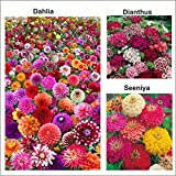 #5: Vysh Agro 3 Varieties of Flower Seeds - Dahlia, Seeniya and Dianthus for Home Garden (30+ Seeds)