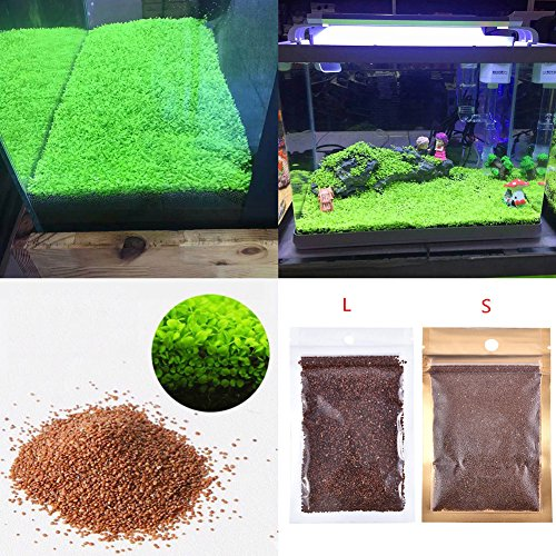 Acquario piante acquatiche semi double Leaf Carpet acqua erba, per acquario roccia Lawn Garden Decor