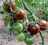 Tomaten Schwarzer Prinz - 10 Samen