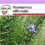 SAFLAX - Romero - 100 semillas - Rosmarinus officinalis