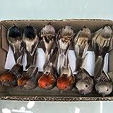 lwingfly Künstliche Simulation Schaum Vogel, Feder Künstliche Spatz Clips Ornamente DIY Handwerk Für Hochzeit Dekoration Party Zubehör 10cm (Sparrow, 6)