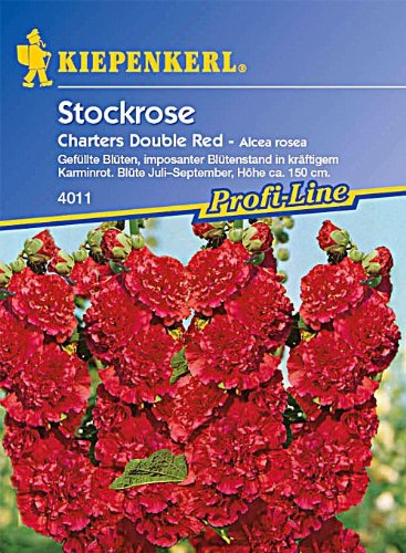 Stockrosen, 'Chaters Double Red'