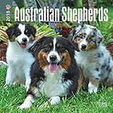 Australian Shepherds 2018 Calendar
