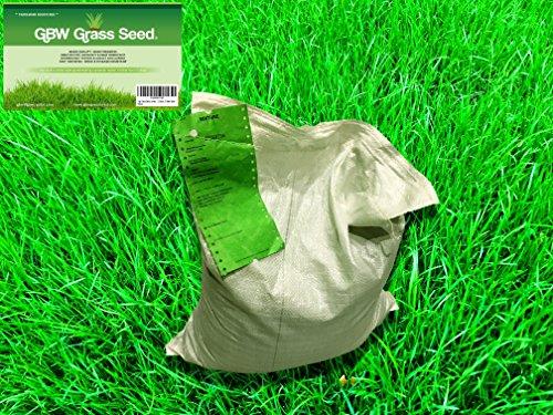 1-kg-de-graine-dherbe-de-qualite-premium-couvre-35-m-graine-de-gazon-a-croissance-rapide-et-resistan