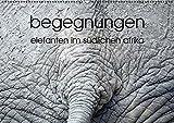 begegnungen - elefanten im südlichen afrika (Wandkalender 2016 DIN A2 quer): elefantenbeobachtung (Monatskalender, 14 Seiten ) (CALVENDO Tiere)