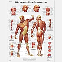 3B Scientific VR0118L - Póster explicativo sobre la columna vertebral humana (en alemán)