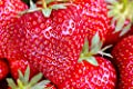 Riesen Erdbeeren / die größte Erdbeere der Welt / ca. 50 Samen / aromatisch / gesund / Vitamine von Samenquelle.de - der Samen Versand - Du und dein Garten