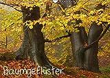 Baumgeflüster (Wandkalender 2019 DIN A3 quer): Zauberhafte alte Bäume (Monatskalender, 14 Seiten ) (CALVENDO Natur)