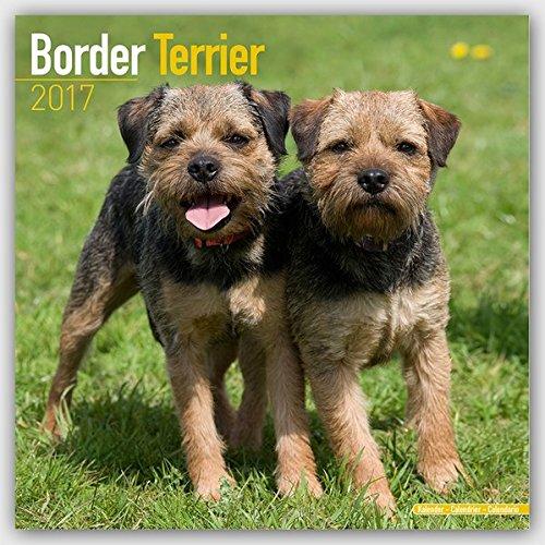 border-terrier-calendar-2017-square