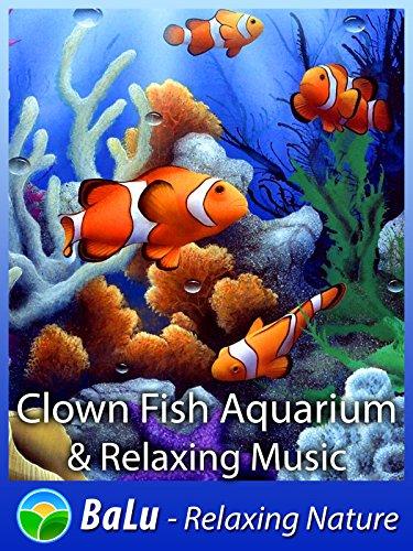 clown-fish-aquarium-relaxing-music-balu-relaxing-nature-ov