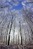 Impression sur Bois 100 x 150 cm: Sun in The Winter Forest de Juerg Alean/Science Photo Library...