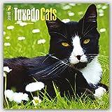Tuxedo Cats 2016 - Tuxedo-Katzen - 18-Monatskalender: Original BrownTrout-Kalender [Mehrsprachig] [Kalender] (Wall-Kalender)