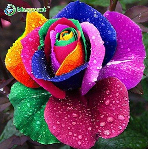 240 Seeds 24 couleurs arc-en-rare rose graines de fleurs multicolores, dans un paquets, bonsaï jardin coloré rose graines de fleurs