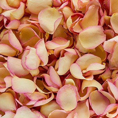 Biologisch abbaubare Hochzeitskonfetti-Rosenblätter (Elfenbein mit rosa Rand, 2 Liter) - Rosenblätter Getrocknete Rosa