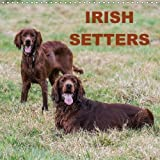 Irish Setters (Wall Calendar 2018 300 × 300 mm Square): Photos of Irish setters at rest and play (Monthly calendar, 14 pages ) (Calvendo Animals)