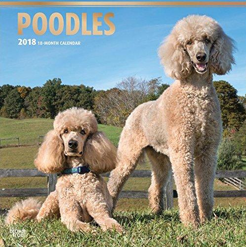Poodles 2018 Calendar