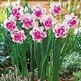 100pcs narciso fiori, semi narciso (non Daffodil bulbi) semi di bonsai fiore pianta piante acquatiche doppie petali Narcissus Garden 1