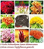 35x 8 Farben hanenkamm seme/ cristata misto GIARDINO CAMERA pianta semi Novità #90