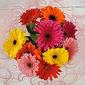 Fresh Flowers Delivered & Handwritten Card - Bright Cheery Large Gerbera Flower Bouquet - FREE UK Next Day Delivery in 1hr Time-Slot 7 Days a Week - Send a Bunch to Brighten a Special Someones Day